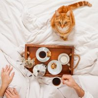 Katzenfeuchtnahrung