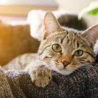 Katzen-Nahrungsergänzung